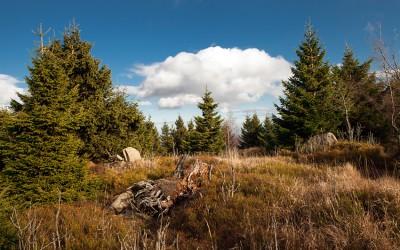 Herbstferien im Harz