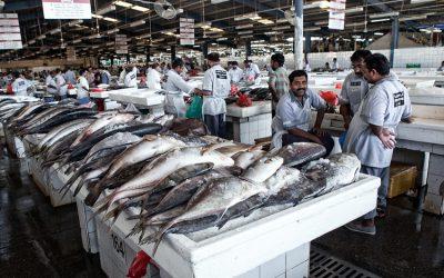 Fischmarkt in DUBAI